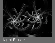 Night Flower von Fractal Fineart